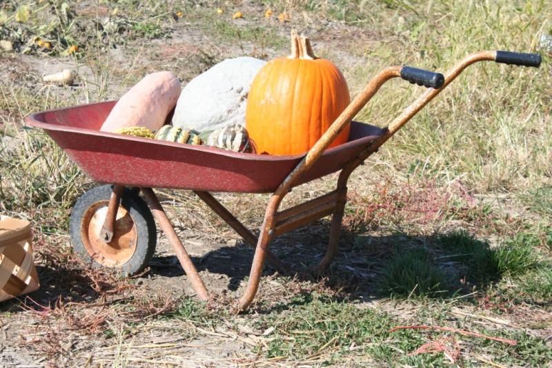 Indianapolis Pumpkin Patch Field Trip