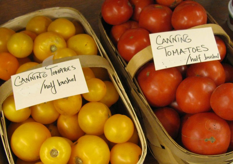 Indianapolis Canning Tomatoes