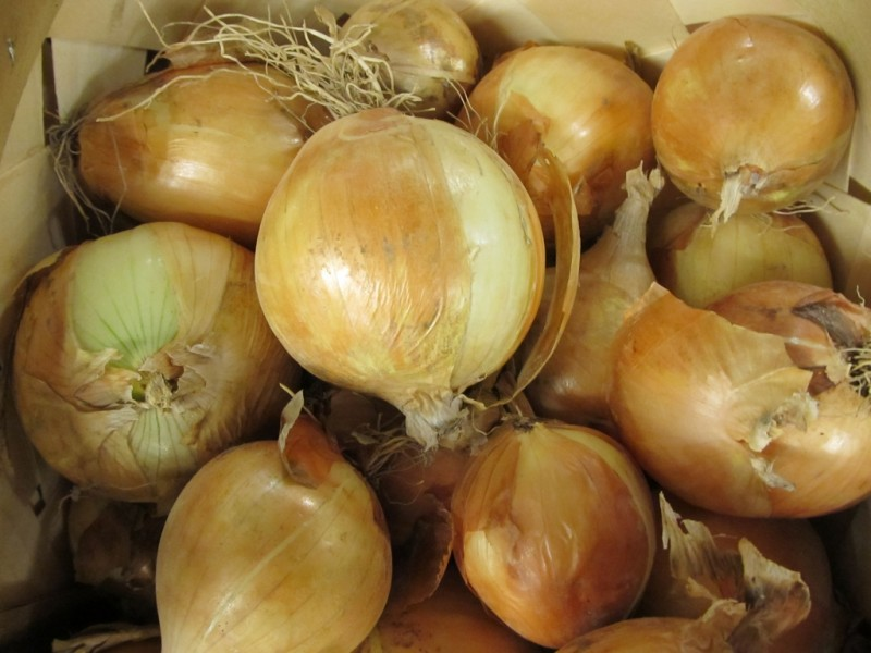 Indiana Grown Onions