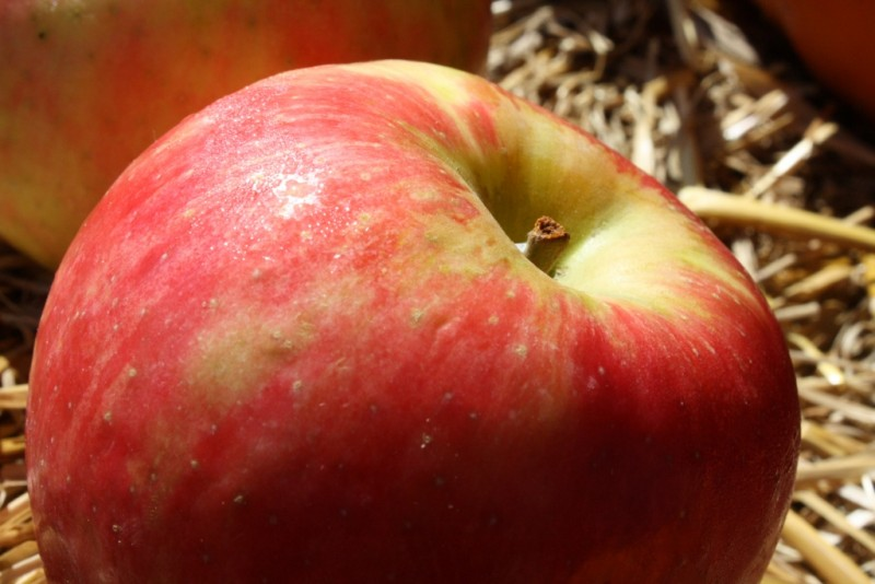 Indiana Honeycrisp Apples