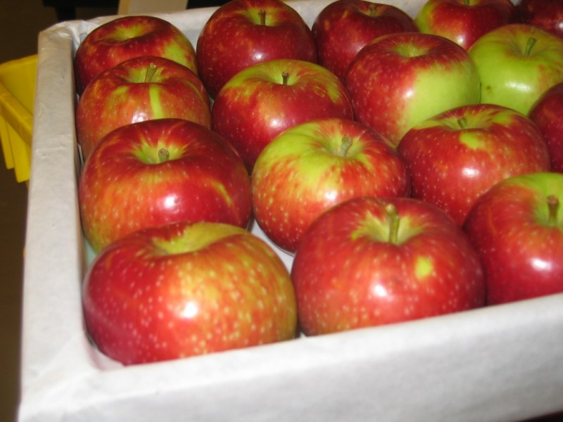 Early Blaze Apples