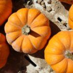 Mini Pumpkins Indianapolis