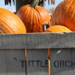 Pumpkins Indianapolis