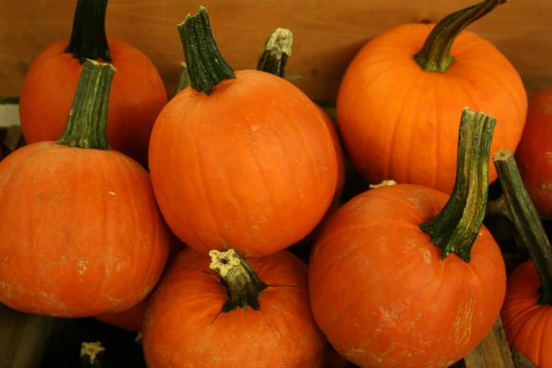 Pie Pumpkins Indiana