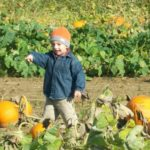 Pumpkin patch Indiana