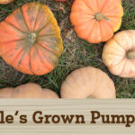 Tuttle's Grown Large Winter Squash