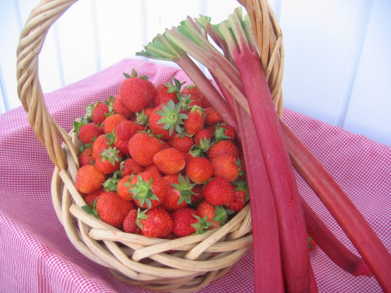 indiana strawberries