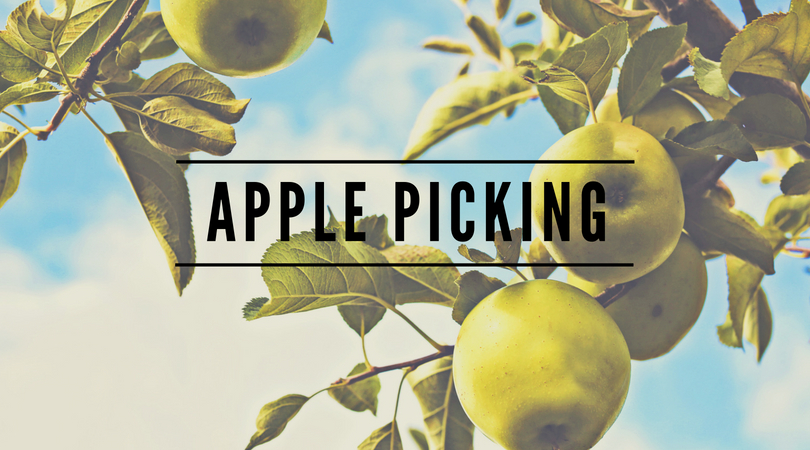 apple picking time in indiana