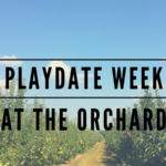 playdate week at the orchard apple picking