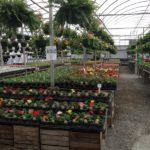 Spring Greenhouse Farm Garden Party Indipanapolis