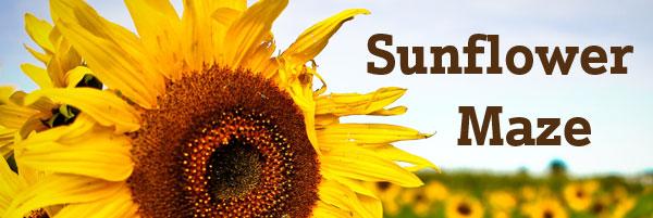 sunflower maze indianapolis