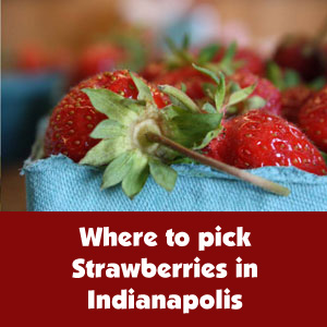 where-to-pick-strawberries-in-indianapolis