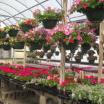 spring greenhouse tours with lunch