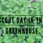 scout day in the greenhouse