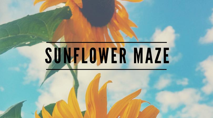 indianapolis sunflower maze